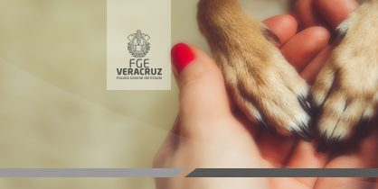 Capacita Fiscal Especializado a estudiantes universitarios y grupos protectores de animales