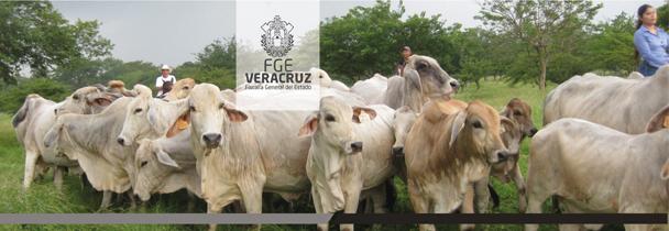 Se reúne Fiscal General con alcalde de Tlacotalpan para evitar maltrato a animales en el marco de festejos patronales