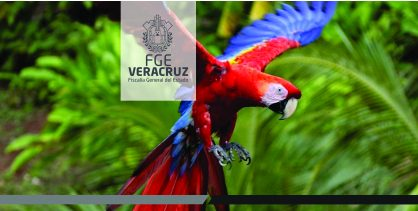 Capacita FEDAYCA a servidores públicos del ayuntamiento de Teocelo en materia de protección animal y ambiental