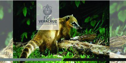 Verifica FEDAYCA estado de flora y fauna afectada por incendio en Las Vigas