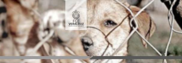Vinculado a proceso por maltrato y crueldad hacia un canino, en Tierra Blanca